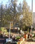 more-garden